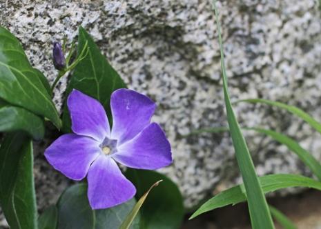 Granite Blossom