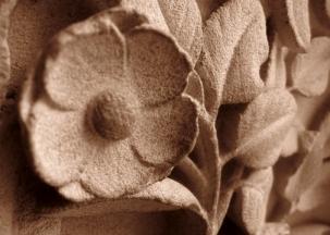 Flower of Notre Dame