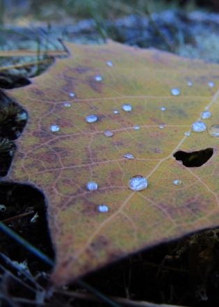 Autumn Dew #2