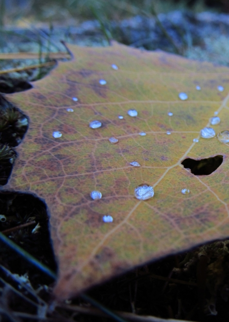 Autumn Dew #2