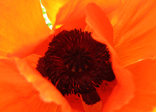 #PC5 - Internal Workings of a Poppy